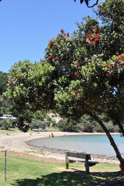 Pohutakawa coast