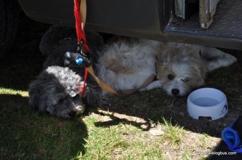 dogs copyright THE KIWI BLOG BUS