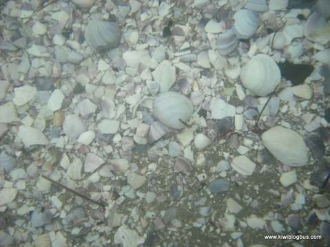 Taking underwater pictures of shells